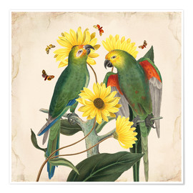 Premium poster  Oh my parrot II - Mandy Reinmuth