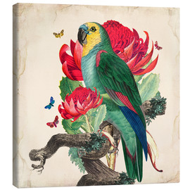 Canvas print  Oh My Parrot X - Mandy Reinmuth