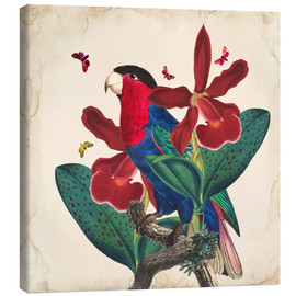 Canvas print  Oh My Parrot VII - Mandy Reinmuth
