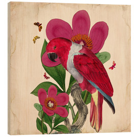 Wood print  Oh My Parrot VI - Mandy Reinmuth