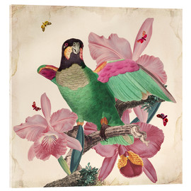 Acrylic print  Oh my parrot VIII - Mandy Reinmuth