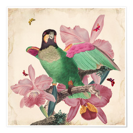 Premium poster  Oh my parrot VIII - Mandy Reinmuth