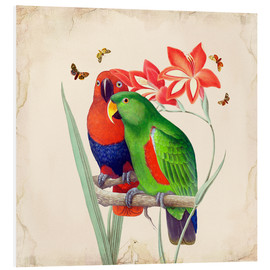 Foam board print  Oh My Parrot I - Mandy Reinmuth