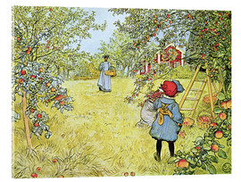 Acrylic print  The Apple Harvest - Carl Larsson