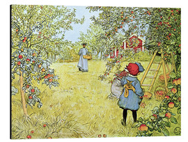 Aluminium print  The Apple Harvest - Carl Larsson