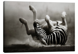 Canvas print  Zebra rolling upside down on dusty desert sand - Johan Swanepoel