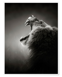 Premium poster  The reputation of the king - Johan Swanepoel
