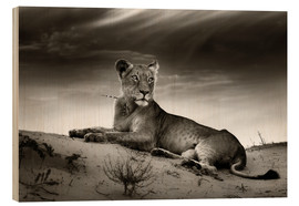 Wood print  Lioness resting on top of a sand dune - Johan Swanepoel