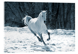 Acrylic print  Gray mare in snow