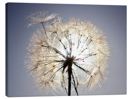 Canvas print  Dandelion is ready to fly
