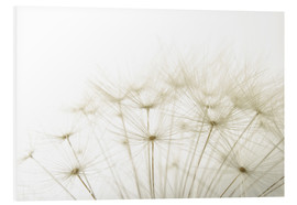 Foam board print  Fluffy dandelion