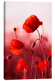 Canvas print  Poppies at sunset