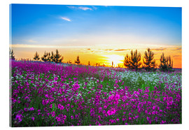 Acrylic print  Sunrise over a blossoming meadow