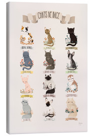 Canvas print  cat breeds french - Kanzilue