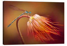 Canvas print  Dragonfly on a dry plant - Jaroslaw Blaminsky