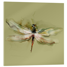 Acrylic print  Dragonfly in watercolor