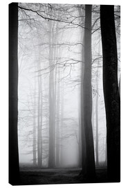 Canvas print  Trees in fog