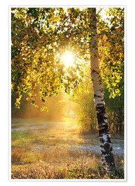 Premium poster  Birch trees in a summer forest