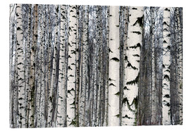 Acrylic print  Birch forest in winter