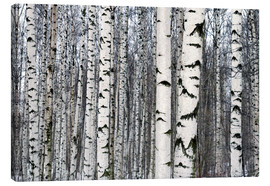 Canvas print  Birch forest in winter
