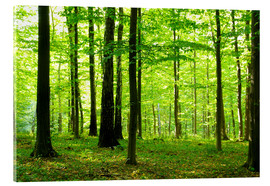 Acrylic print  Sunlight in the green forest