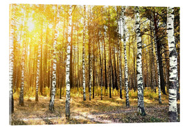 Acrylic print  birch trees in a autumn forest