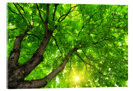 Acrylic print  Under a big green tree