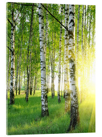 Acrylic print  Birches in summer forest
