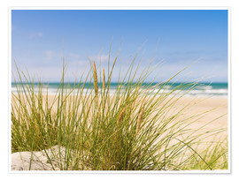 Premium poster  Beach with dune grass in sand