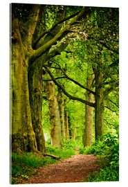Acrylic print  Beautiful spring colors in a forest