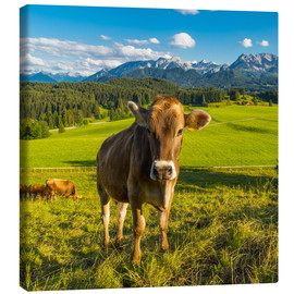 Canvas print  Funny Cow in the Alps - Michael Helmer