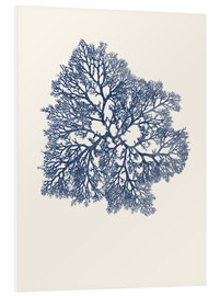 Foam board print  Navy coral 3 - Patruschka