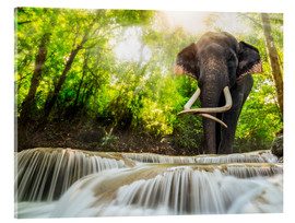 Acrylic print  Asian Elephant