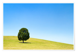 Premium poster Lonely tree on a green meadow