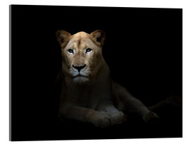 Acrylic print  White Lioness in the dark night