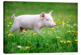 Canvas print  Piglet on a Spring Meadow