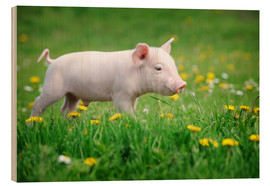 Wood print  Piglet on a Spring Meadow