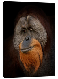 Canvas print  Orangutan Portrait
