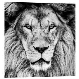 Acrylic print  King Lion - black and white