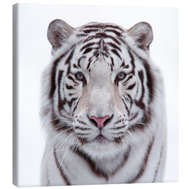 Canvas print  The white tiger