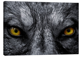 Canvas print  The evil wolf