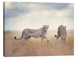 Canvas print  Cheetahs on the hunt
