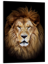Acrylic print  King of the Jungle Portrait