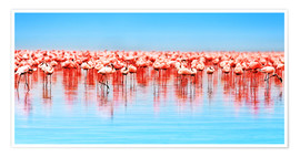Premium poster  Flamingo in the lake Nakuru