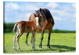 Canvas print  Mother Love - mare with foal