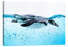 Canvas print  Diving Ender Penguin
