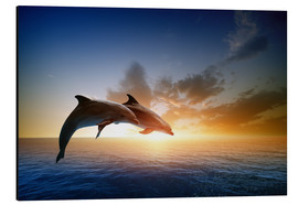 Aluminium print  Dolphins in the sunset