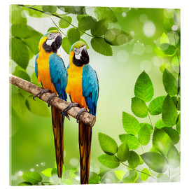 Acrylic print  Two Macaw Parrots