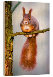 Wood print  Squirrel on small branch