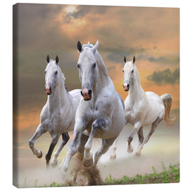 Canvas print  White stallions at gallop